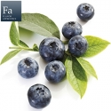 Blueberry Wild